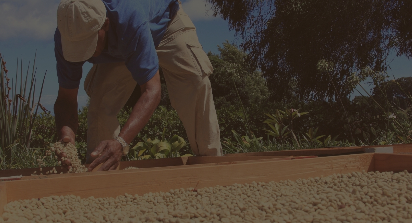 Image of coffee farmer drying beans